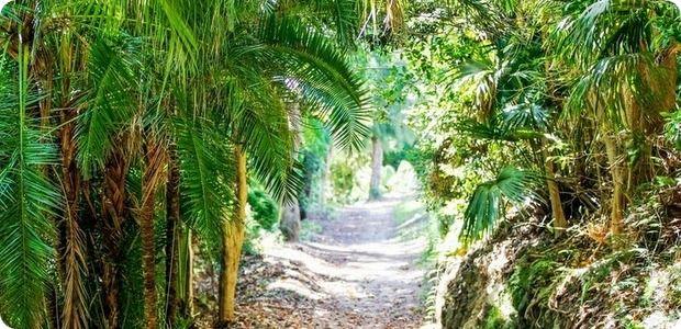 r Bermuda-arboretum-generic