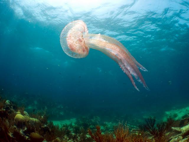 Sergey Goncharov underwater bermuda (15)