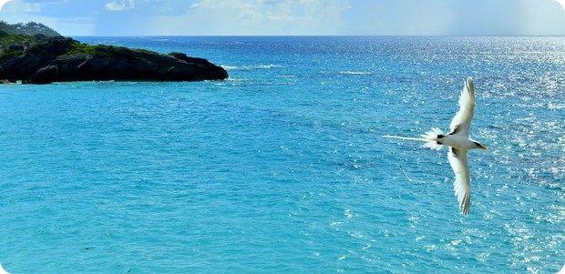 r Bermuda-bird-watching