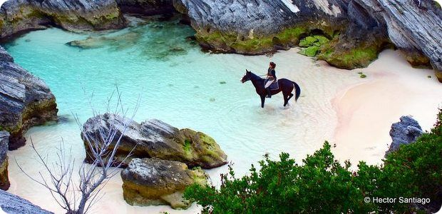 r horseback-riding-bermuda