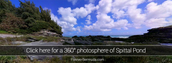 Spittal-pond-360-degree-view