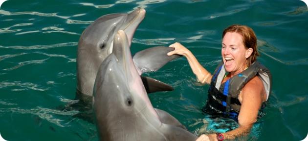 R dolphin quest bermuda generic