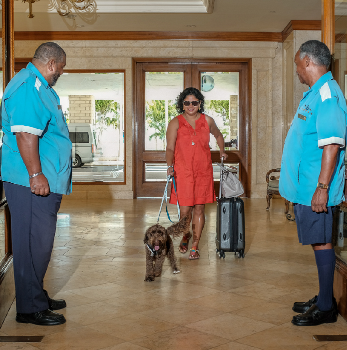 Fairmont Southampton Is Now Dog Friendly Forever Bermuda
